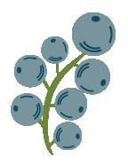Flor de Cruceral